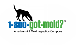 What To Know About Certified Mold Inspectors & Certified